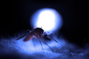 LED Lights Insects